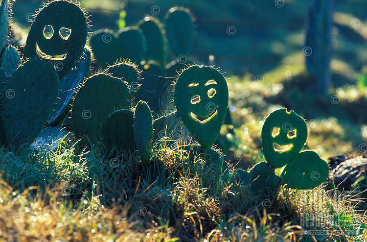 Cactus that can smile