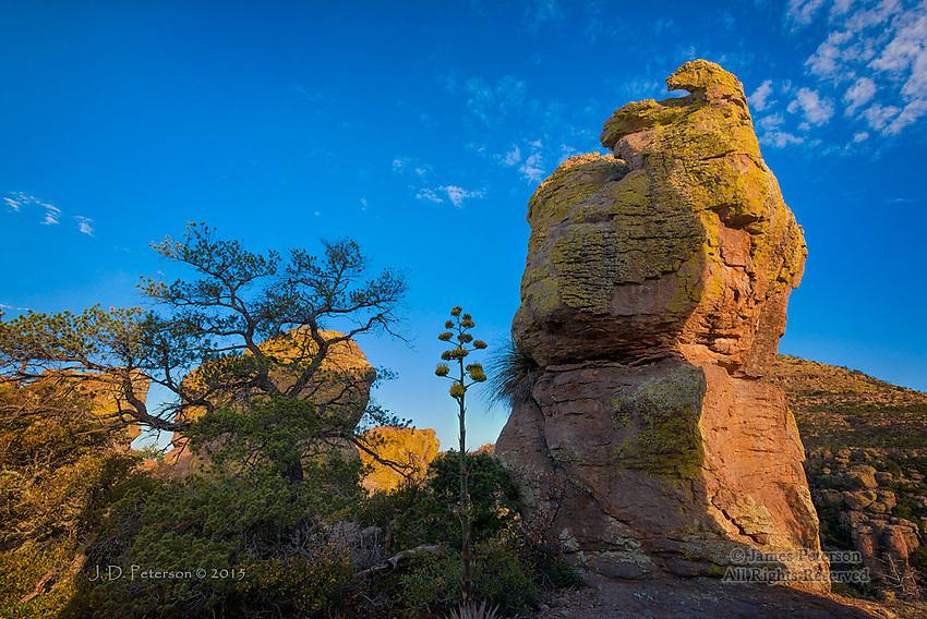 Morning Light, Chiricahua National Monument