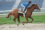 Preakness contender Shackleford gallops at Pimlico Race Course in Baltimore, MD on Thursday morning, May 19, 2011.(Joan Fairman Kanes/EclipseSportswire)
