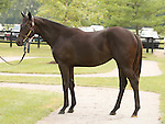13 July 2010.  Hip #305 Speightstown - Miss Stormy Pick filly.