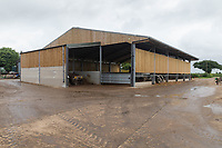 6-7-2021 Cattle building on a dairy farm<br /> ©Tim Scrivener Photographer 07850 303986<br />      ....Covering Agriculture In The UK....