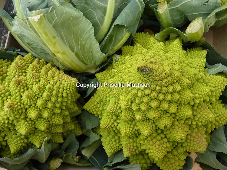 Closeup of two heads of Roman cauliflower