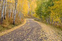 Autumn on Owl Creek Pass road.