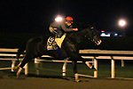 Higher Power, trained by trainer John W. Sadler, exercises in preparation for the Breeders' Cup Classic at Keeneland Racetrack in Lexington, Kentucky on October 31, 2020.