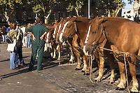 Le Festival de l'élevage et du veau de lait élevé sous la mère.<br /> Concours de chevaux, place de la Guierle.