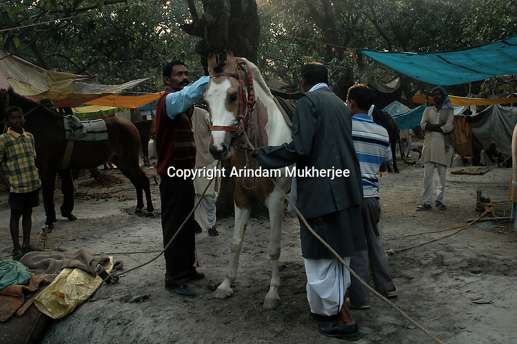 Horse owners prepare a horse to be shown in the horse show at Sonepur fair ground. Bihar, India, Arindam Mukherjee