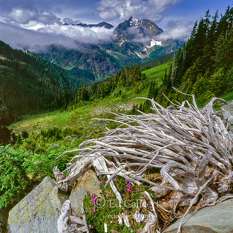 La Crosse Pass, Mount Anderson, Olympic National Park, Washington
