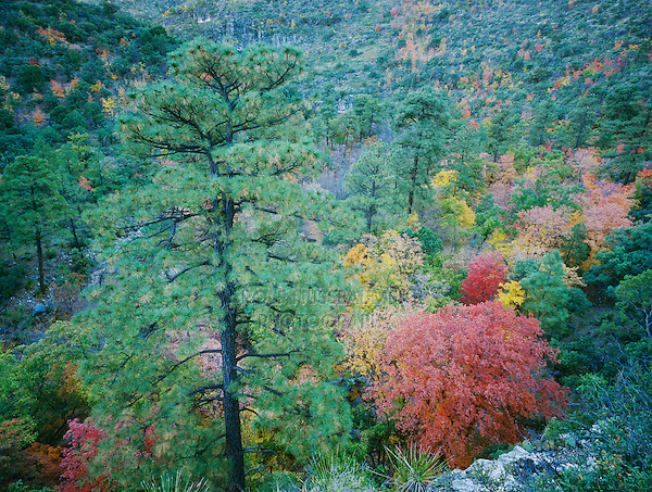 McKittrick Canyon with fall colors, Guadalupe Mountains National Park, Texas, USA, November 2005