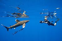 free-diving underwater photographer photographs an oceanic whitetip shark, Carcharhinus longimanus, accompanied by pilot fish, Naucrates ductor, Kona Coast, Big Island, Hawaii, USA, Pacific Ocean, MR 484
