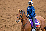 DEL MAR, CA - OCTOBER 30: Lady Eli, owned by Sheep Pond Partners and trained by Chad C. Brown, exercises in preparation for Breeders' Cup Filly & Mare Turf at Del Mar Thoroughbred Club on {mothname} 30, 2017 in Del Mar, California. (Photo by Jesse Caris/Eclipse Sportswire/Breeders Cup)