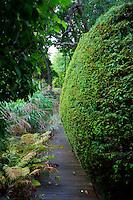 Wooden pathway in the garden