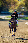 May 01, 2014: Medal Count prepares for the Kentucky Derby at Churchill Downs in Louisville Ky. Alex Evers/ESW/CSM