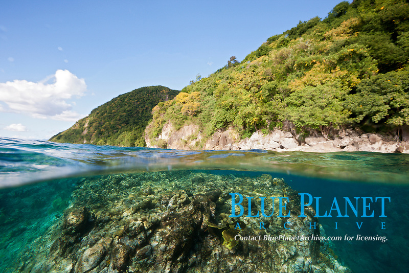 over under or split view of coral and island of Dominica, Caribbean, Atlantic Ocean