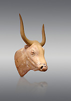 The Minoan clay bull's head rhython lbation vessel,  Palaikastro 1500-1450 BC; Heraklion Archaeological  Museum, grey background