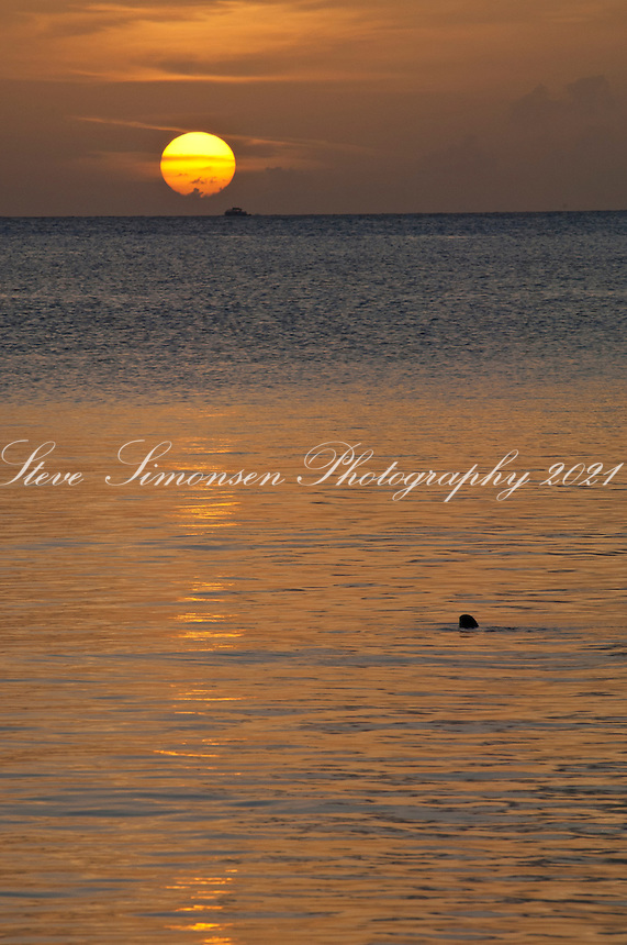 Sunset at Maho Bay with a turtle surfacing for air<br /> Virgin Islands National Park<br /> St. John, U.S. Virgin Islands