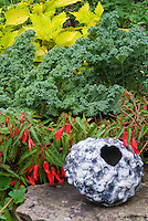 Vegetable kale Winterbor Brassica, Coleus Solenostemon Pineapple Queen, Begonia Romance, ornamental pot aka Cavalo Nero kale