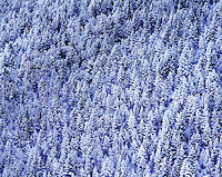 Snow covered trees on Horseshoe Mountain Bighorn National Forest Wyoming