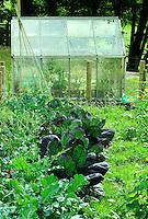 Vegetable garden with greenhouse...Copyright..John Eveson, Dinkling Green Farm, Whitewell, Clitheroe, Lancashire. BB7 3BN.01995 61280. 07973 482705.j.r.eveson@btinternet.com.www.johneveson.com