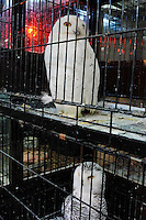 Snowy Owls for sale at the Noah Inner City Zoo - a pet shop that sells exotic animals. The rare and endangered animal sells for 480,000 yen (5300 US$). The Noah Inner City Zoo is a pet shop that sells exotic animals. The 'zoo' claims to have more than 300 species for sale, many of which are rare and some are even endangered.