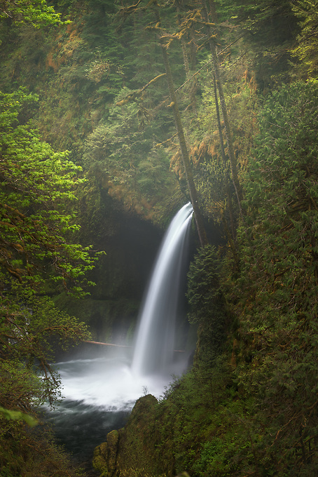 Metlako Falls in Oregon's Columbia Gorge seen through the dense forest.  This viewpoint collapsed in the winter of 2017.