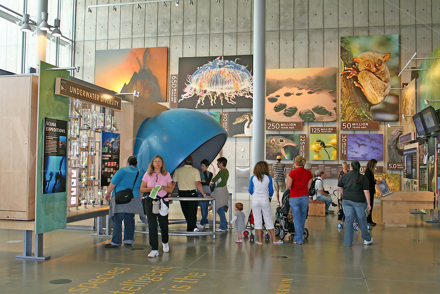 People exhibits, new California Academy of Sciences, San Francisco California