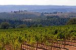 Italien, Umbrien, Strada dei Vini - Weinstraße bei Orvieto | Italy, Umbria, Strada dei Vini - wine route near Orvieto