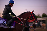OCT 25: Breeders' Cup Dirt Mile entrant Blue Chipper, trained by Kim Young Kwan, at Santa Anita Park in Arcadia, California on Oct 25, 2019. Evers/Eclipse Sportswire/Breeders' Cup