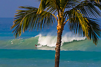 Surfer Dropping In: A surfer drops in on a large wave, framed by a palm tree at Hapuna Beach, Big Island.