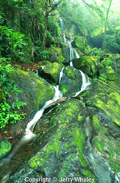 Place of a Thousand Drips, Great Smoky Mountains National Park, TN