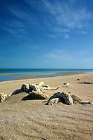 Fishing debris on Flinder's Beach, Mapoon, Cape York Peninsula