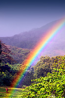 Colorful rainbow above a horse in a field, during a tropical shower in the highlands of Kauai Island in Hawaii