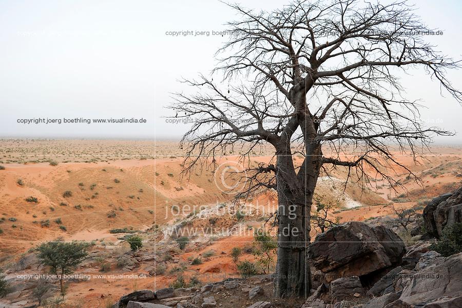 MALI,  Bandiagara, Dogonland, habitat of the ethnic group Dogon, view from Falaise rock formation, Baobab tree