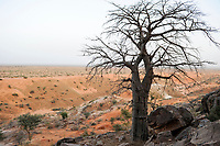MALI,  Bandiagara, Dogonland, habitat of the ethnic group Dogon, view from Falaise rock formation, Baobab tree