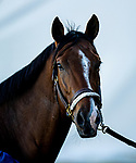 November 3, 2020: Jackie's Warrior, trained by trainer Steven M. Asmussen, exercises in preparation for the Breeders' Cup Juvenile at  Keeneland Racetrack in Lexington, Kentucky on November 3, 2020. Alex Evers/Eclipse Sportswire/Breeders Cup