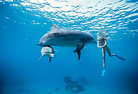 Dolphin trainer swims with Bottlenose Dolphins, Tursiops truncatus, Dolphin Reef, Eilat, Israel, Red Sea.
