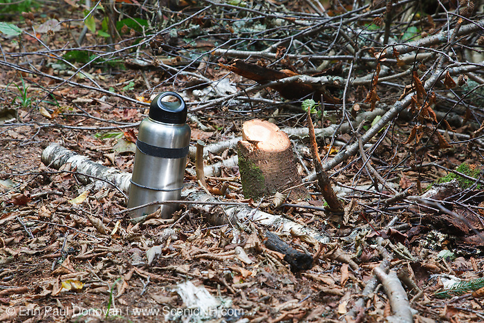 September 2011 - A freshly cut tree along the Mt Tecumseh Trail in the New Hampshire White Mountains. Proper technique is to cut trees flush with the ground. Leaving pointed stumps are dangerous if stepped or fallen upon and pose a safety issue for passing by hikers.