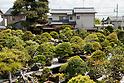 8th World Bonsai Convention in Saitama