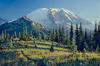 Mt. Rainier<br />   from Grand Park<br /> Mt. Rainier National Park<br /> Cascade Range,  Washington