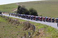 4th September 2020; Millau to Lavaur, France. Tour de France cycling tour, stage 7;  Peleton through open fields