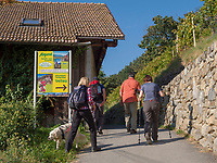 Weinlehrpfad am Algunder Waalweg, Algund bei Meran, Region Südtirol-Bozen Italien, Europa<br /> wine educational trail at hiking trail Algunder Waalweg,  Lagundo village near Merano, Region South Tyrol-Bolzano, Italy, Europe