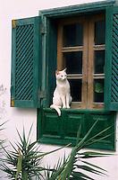 Europe/Espagne/Iles Canaries/Lanzarote/Teguise : Chat à une fenêtre