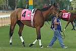 April 10, 2015: #4 Diva's Diamond before the running of the Apple Blossom Handicap at Oaklawn Park in Hot Springs, AR. Justin Manning/ESW/CSM