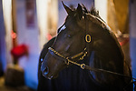 LOUISVILLE, KY - MAY 01: Always Dreaming poses while walking the shed row at Churchill Downs on May 01, 2017 in Louisville, Kentucky. (Photo by Alex Evers/Eclipse Sportswire/Getty Images)