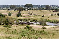 Tanzania. Serengeti. Vehicles Lined up to Watch Wildebeest Crossing of the Mara River on their Northward Migration.