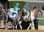 """LEXINGTON, KY - OCTOBER 12: #10 Rum Go and jockey James Graham before running in the 26th running of the JPMorgan Chase Jessamine (Grade 3) $150,000 """"Win and You're In Juvenile Fillies Turf Division"""" at Keeneland Race Course.  October 12, 2016, Lexington, Kentucky. (Photo by Candice Chavez/Eclipse Sportswire/Getty Images)"""