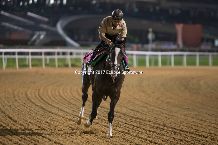 DUBAI,UNITED ARAB EMIRATES-MARCH 24: Epicharis,trained by Kiyoshi Hagiwara,exercises in preparation for the UAE Derby at Meydan Racecourse on March 24,2017 in Dubai,United Arab Emirates (Photo by Kaz Ishida/Eclipse Sportswire/Getty Images)