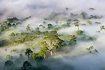 Mist and low cloud hanging over Lowland Dipterocarp Rainforest, just after sunrise. Heart of Danum Valley, Sabah, Borneo.