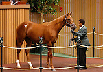 September 14, 2015: Hip 26 Speightstown - Wild Gams colt consigned by Warrendale Sales.  Candice Chavez/ESW/CSM