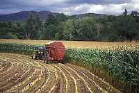 harvest, farming, fall, Middlesex, VT, Vermont, Farmer cutting his cornfield with a tractor in autumn.