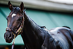 BALTIMORE, MD - MAY 18: Always Dreaming poses for the camera after he receives a bath after training on the track in preparation for the Preakness Stakes at Pimlico Race Course on May 18, 2017 in Baltimore, Maryland.(Photo by Douglas DeFelice/Eclipse Sportswire/Getty Images)